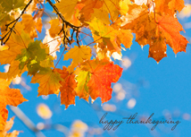 Clear Blue Sky with Fall Leaves Thanksgiving Card